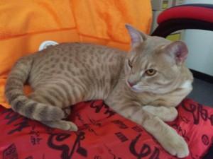 George 1 year old