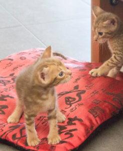 Dany kitten